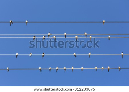 Swallows on the wire