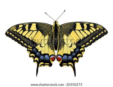 Swallowtail butterfly - isolated object Zdjęcia stock ©