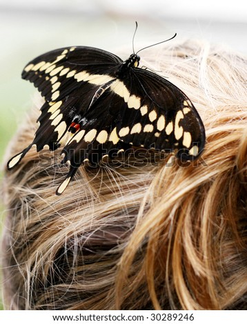 swallowtail butterfly on top of ladies hair