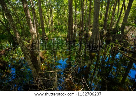 Swamp and grass. Water and tree. Everglades National Park. Florida. USA.
