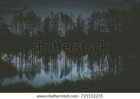 Swamp at gloomy weather in Latvia. Apocalyptic feeling hiking on a wooden trail through the bog with dark clouds. Swamp is surrounded with small lakes, junipers, plants and wildlife.