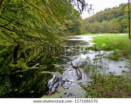 Swamp at Nationalpark Jasmund, Ruegen Island, Mecklenburg-Western Pommerania, Germany