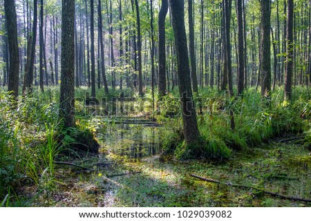 Swamp fauna, beautiful swamp landscape, swamp vegetation