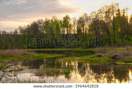 Swamp in the forest. Boggy lake. The sun rises. Sunsets. Over the forest. an area of low-lying, uncultivated ground where water collects; a bog or marsh. Foto d'archivio ©