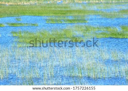 Swamp landscape in Nature park Vrana lake in Croatia