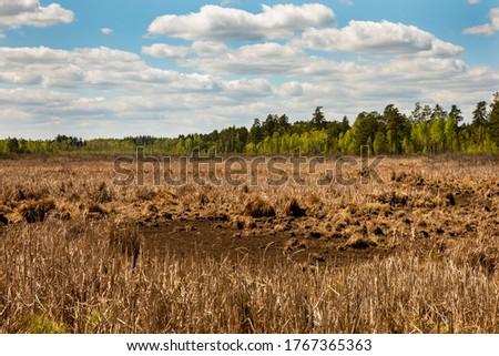 Swamp landscape sunny spring day, blue sky. Magazyn Nature Reserve in Poland, Europe. Zdjęcia stock ©