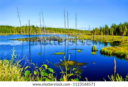 Swamp marshland water landscape. Swamp land backwater panorama. Swamp trees bog backwater view