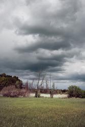 Swamp, natural marshland, bog on a gloomy day with dramatic sky before storm. Dry pampas grass and dead trees. Outskirts of North Berlin in Germany.