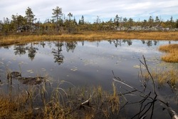 Swamp or lake with megalithic seid boulder stones, dead trees in nature reserve on mountain Vottovaara, Karelia, Russia.