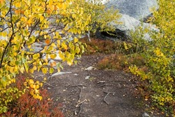 Swamp or lake with megalithic seid boulder stones, dead trees in nature reserve on mountain Vottovaara, Karelia, Russia. Autumn in montain