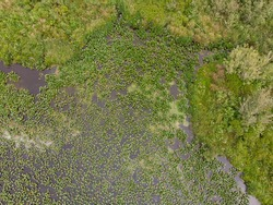 Swamp or lake with waterways top view