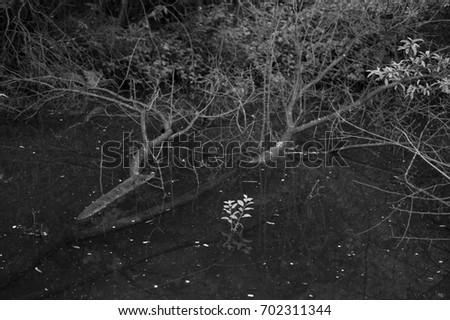 Swamp / pool with water, tree and branches. Dark melancholic atmosphere #702311344
