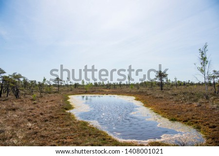 Swamp trail. Summer sunny Day. Kemeri National Park Nature Trail. #1408001021