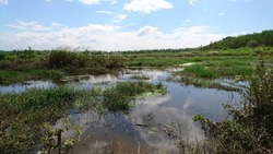 Swamp, water flooding over flow the land, need fill soil on the grounds