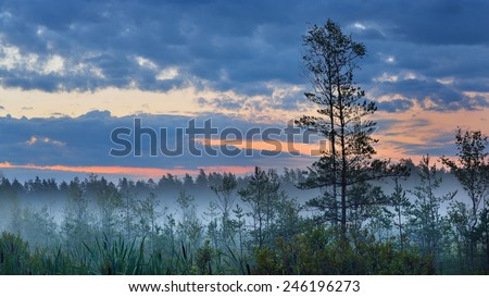 Stock Photo Swamp with birch trees in Latvia