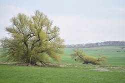 swampland trees in the Eifel