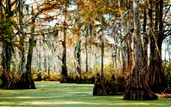 Swampy Bayou in Louisiana