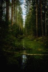 Swampy stream in the dark forest