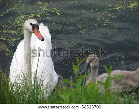 Swan and her one child