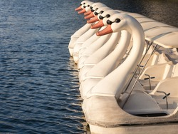 Swan Boat Floating in Lake Water cycle Leisure activity in Park