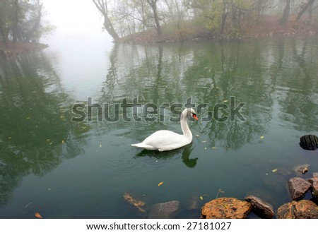 swan in to the pond - stock photo