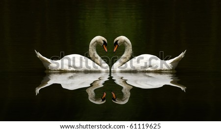 swan love reflection over a beautiful lake - stock photo