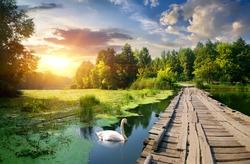Swan near wooden bridge on river at sunset