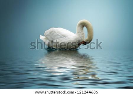 Swan on blue lake