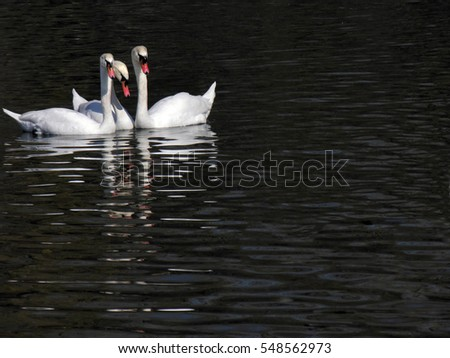 swan's family in the lake in wild nature,concept