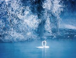 Swan spring, Xinjiang, Yili 9