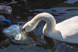 Swan with waste