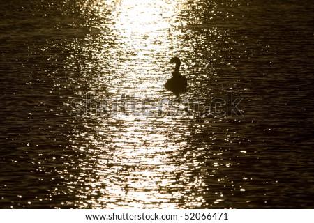 swans at sunset sun glitter - front