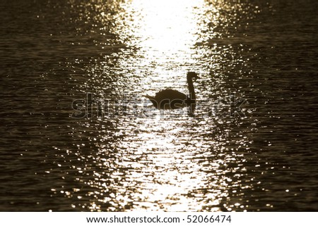 swans at sunset sun glitter - side