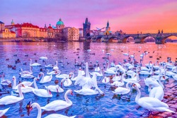 Swans on Vltava river, towers and Charles Bridge at sunset in Prague, Czech Republic.