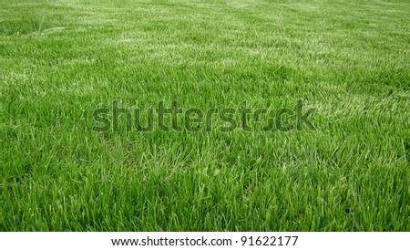 sward - stock photo