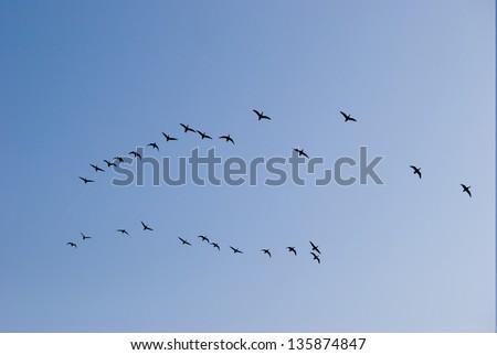 Swarm of Birds