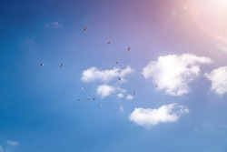 Swarm of birds on the beautiful blue sky with some clouds on it