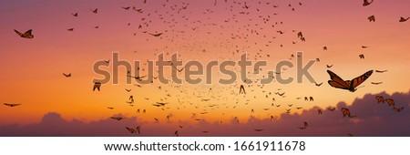 swarm of monarch butterflies, Danaus plexippus group during sunset (3d illustration banner) Stock photo ©