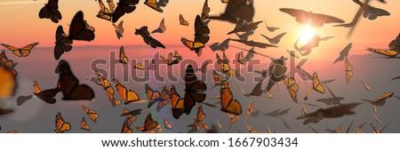 swarm of monarch butterflies, Danaus plexippus group during sunset (3d rendering banner) Stock photo ©