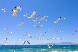swarm of sea gulls flying close to the beach of mykonos island,Greece