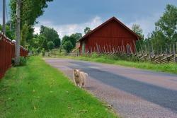 Swedish village idyll with cat.Swedish idyllic Smaland. A Small Rural farmland village.Sweden, västervik