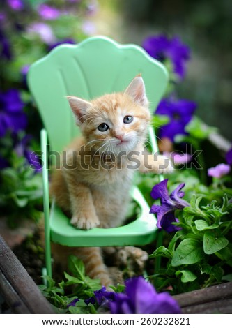 Sweet adorable homeless baby pet orange tabby kitten sits in vintage style metal garden chair surrounded by  purple flowers and plants placed  in an old vintage planter.