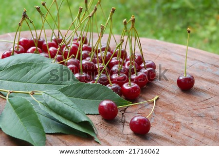 Sweet and juicily cherries heap on a tree background.