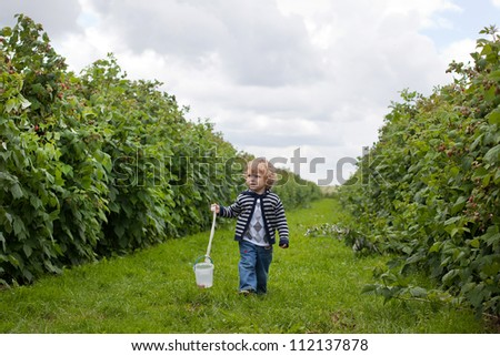 Sweet baby boy walking through organic raspberry farm