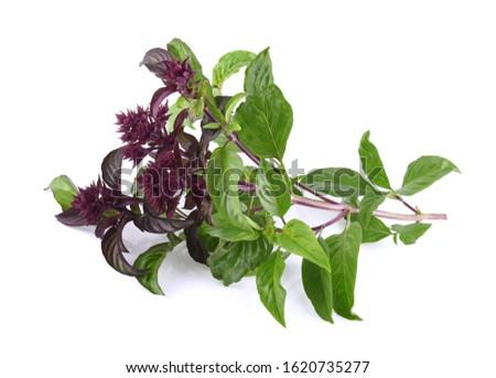 Sweet basil flowers on a white background Zdjęcia stock ©