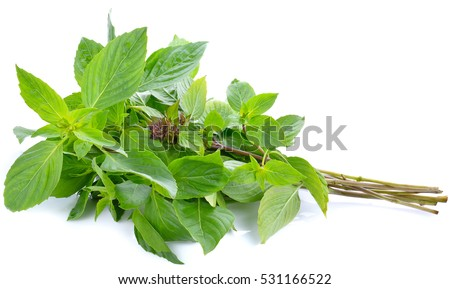 Sweet basil leaves Isolated on white background Foto d'archivio ©