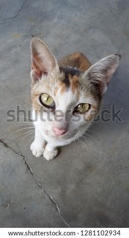 sweet cat (feline)