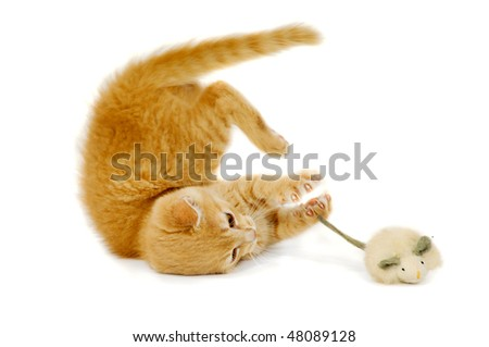 Sweet cat kitten is playing wity toy mouse