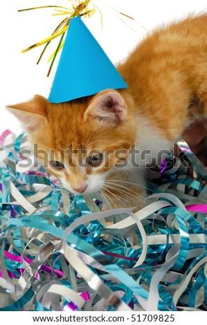 Sweet cat kitten with hat in confetti