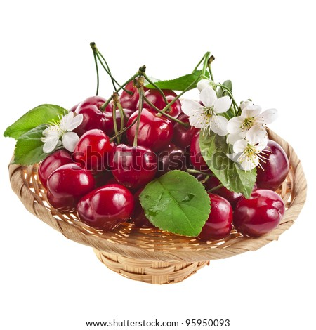 Sweet cherries with flowers in basket  isolated on white background